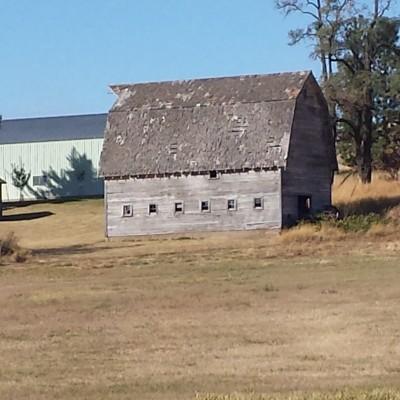 1905-milking-barn